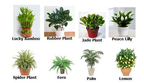 Plants Can Improve And Balance Indoor Chi Energy Truthstar